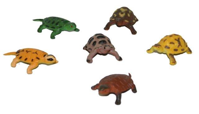 Želvy, 6 ks v sáčku